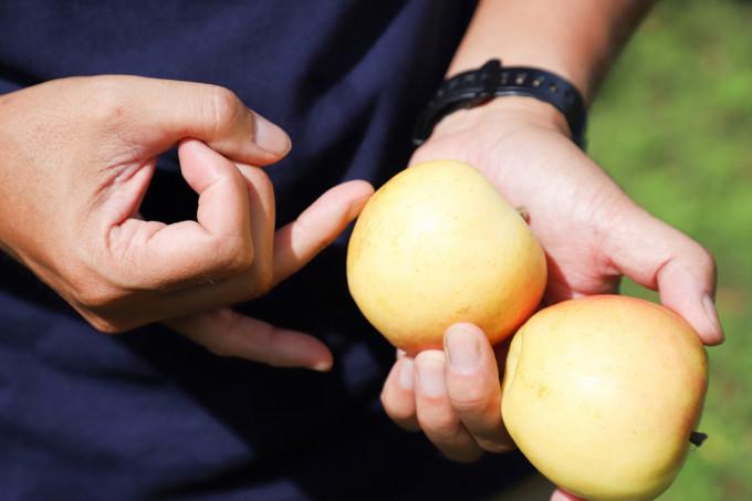 もぎたてのりんご